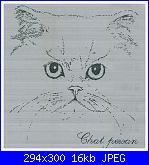 Sciarpina con gatti-gatto-persiano1a-jpg