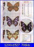 spero che questi vadano vede-fdarfalle2-%5B1600x1200%5D-jpg