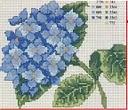 cerco schemi di ortensie-ortensia-blu-jpg