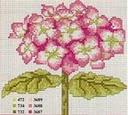 cerco schemi di ortensie-ortensia-rosa-jpg