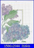 cerco schemi di ortensie-csn-july-2008-10-jpg