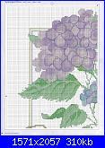 cerco schemi di ortensie-csn-july-2008-09-jpg