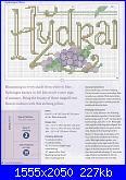 cerco schemi di ortensie-csn-july-2008-11-jpg