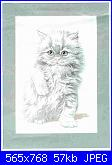 Gatto bianco per Rosie-gatto-bianco-jpg