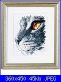 Gatto bianco per Rosie-gatto-jpg