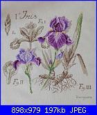 GIO74: I miei ricami-iris-dfa-jpg