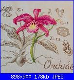 GIO74: I miei ricami-orchidea-dfa-2-jpg