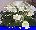 CompleannoTulipanoBianco-100_3852-jpg