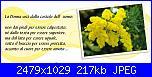 8 marzo festa della donna...post per gli auguri-mimosa-jpg