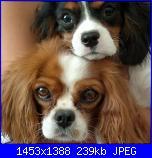 lo so che sono solo ....cani.-2012-07-19-048_1-jpg
