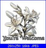 vanwitch: newbie-your_welcome_white_flowers-jpg