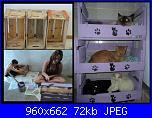 Un bellissimo letto per i nostri gatti-301060_229656353829732_108377716_n-jpg