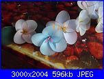 I miei  fiori di filanca ( calze)-dscf4608-jpg