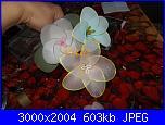 I miei  fiori di filanca ( calze)-dscf4618-jpg