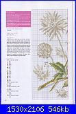 DFEA HS28 - études de botanique *-18-jpg