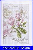 DFEA HS28 - études de botanique *-22-jpg