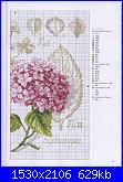 DFEA HS28 - études de botanique *-28-jpg