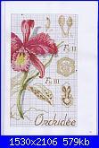 DFEA HS28 - études de botanique *-25-jpg