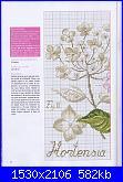 DFEA HS28 - études de botanique *-27-jpg