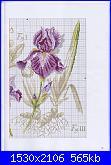 DFEA HS28 - études de botanique *-37-jpg