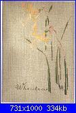 MTSA - Narcisses *-1-wheatear-jpg