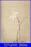 MTSA - Narcisses *-4-white-lady-jpg
