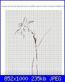 MTSA - Narcisses *-4a-white-lady-jpg