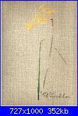 MTSA - Narcisses *-8-warbler-jpg