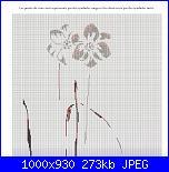 MTSA - Narcisses *-9a-amber-gate-jpg