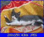 ecco la mia gattina...-immagine-486-%5Biphone%5D-jpg