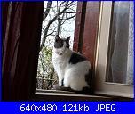ecco la mia gattina...-immagine-034-jpg