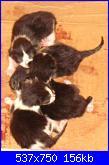 Sono nati!!!!!-cuccioli-neonati-jpg