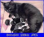 Sono nati!!!!!-allattamento-jpg