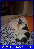 ecco la mia gattina...-lmw1vib2xakhxrgd1ywp-%5B%5D-jpg