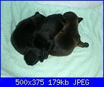Ecco i cuccioli di susy-1-jpg