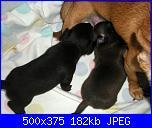 Ecco i cuccioli di susy-dscn2760-jpg