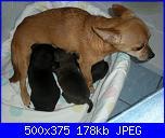 Ecco i cuccioli di susy-dscn2759-jpg