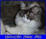 Questa è la mia tigre di nome  Minù!-p1000841-jpg