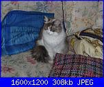 Questa è la mia tigre di nome  Minù!-p1000834-jpg