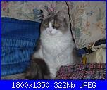 Questa è la mia tigre di nome  Minù!-p1000836-jpg
