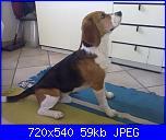 snoopy-beagle-jpg