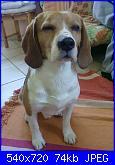 snoopy-beagle2-jpg