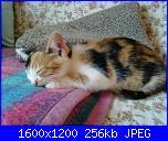 nome-immagine-003-jpg