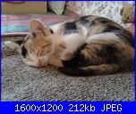 nome-immagine-004-jpg