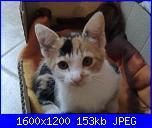 nome-immagine-011-jpg