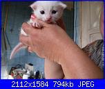 mamma gatta con piccolo-neve-143-jpg