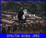 Gattame vario-il-gatto-sul-tetto-che-scotta-jpg