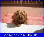 Kuma-5-aprile-2008-011-jpg