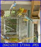 Pappagallini.ci sono amiche appassionate a questi uccellini?-fotos-136-jpg