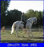 Fotografie del mio ex cavallo di pura razza spagnola-cavallo3-jpg
